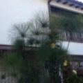 Casa de Huespedes Shalom Victoria